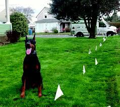 Dog Watch Badifarm