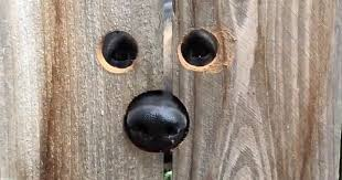 Neighbour Does The Most Brilliant Thing For A Dog Who Kept Jumping Every Day To Say Hello Bored Panda