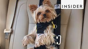 this seat belt keeps your dog safe