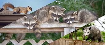 Dallas Ft Worth wildlife removal company | Eco-Safe