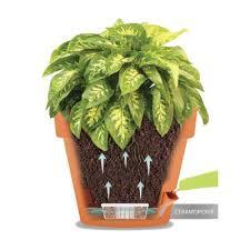 12 best self watering planters
