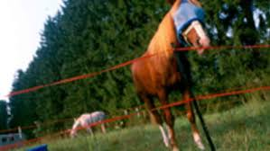 Temporary Paddock Fencing Options Expert How To For English Riders