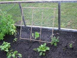 Trellis For Cucumber I Made With Bamboo Chickenwire And Twine Diy Garden Trellis Cucumber Trellis Diy Chicken Wire Fence