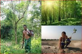 Jadav Payeng – The Forest Man of India – BLOGS