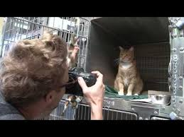 Cat Chat With Caren And Cody: How to Photograph and Groom Shelter Cats:The  Rachael Ray™ Nutrish™ #ShelterCatsAreBeautiful Tour
