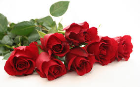 صور ورد احمر جميل ليدي بيرد