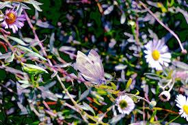 Autumn May 2020 | Mag | Flickr