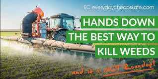 kill weeds and it s not roundup
