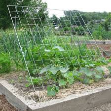 Cucumber Trellis Keep Cucumber And Zucchini Vines Off The Ground