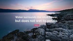 """buddha quote """"water surrounds the lotus flower but does not wet"""