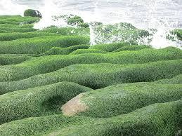 sea groove sea weed old stone trough