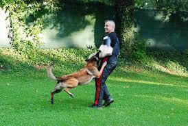 Armando Schmidt ist Schutzhundhelfer in Lörrach - Lörrach - Badische Zeitung