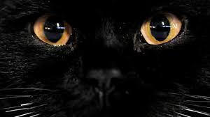 """Résultat de recherche d'images pour """"chat dans la nuit"""""""