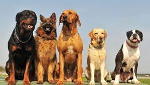 large dog breeds a to z alphabetical