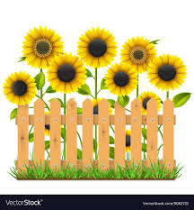 Wooden Fence With Sunflowers Vector Image On Vectorstock Sunflower Clipart Flower Printable Floral Border Design