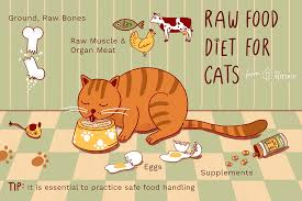 should you feed your cat a raw t