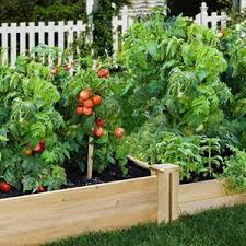 Greenes Fence Raised Garden Beds Lawn Edging Picket Fences Stakes Greenes Fence Company