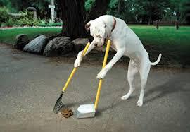 funny pitbull dog wallpaper 7010756
