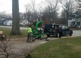 3 Best Tree Services in Cleveland, OH - Expert Recommendations