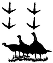 Turkey Decal 6 Set Of 4 2 Turkey Tracks Hunting Wildlife Decal