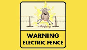 Touching An Electric Fence Experiment Ends As Expected On Pasture
