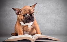 Resultado de imagen de educar un cachorro