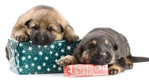 german shepherd gifts for gsd
