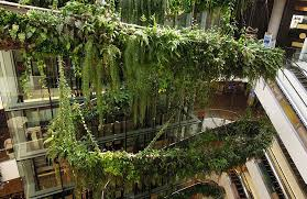 the best and biggest vertical gardens