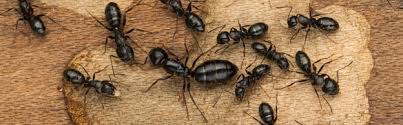 12+ Ant Professional  Pictures