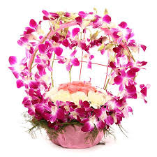 vibrant orchid celebration gifts n