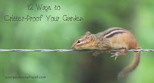 12 Ways To Critter Proof Your Garden Yourgardeningfriend Com