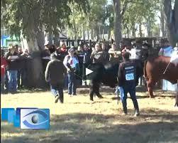 FERNANDO FOSTER - GRAN CAMPEON MACHO - CORRAL DE GUARDIA on Vimeo