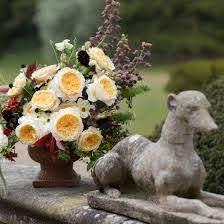 Effie Rose - EU - David Austin Luxury Cut Roses