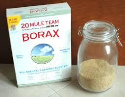 borax ant ants