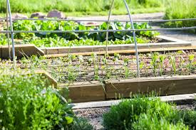 what is a community garden benefits