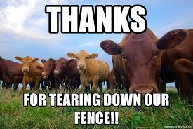 Thanks For Tearing Down Our Fence Cows Chip Meme Generator