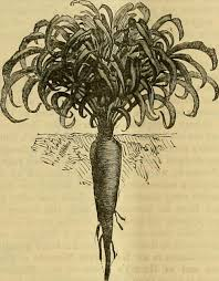 """Image from page 151 of """"The Gardeners' chronicle : a weekl…   Flickr"""