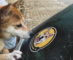 Custom Pet Car Decal Sticker Astonishme