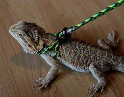 reptile harness for bearded dragons