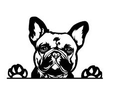 French Bulldog Car Decal Sticker Frenchie Dog Sticker Vinyl Window Ute Cute Fun Dog Love Frenchies French Bulldog Gifts Frenchie Gifts In 2020 French Bulldog French Bulldog Gifts Bulldog