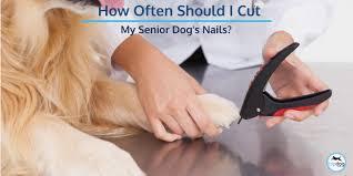 how often should i cut my senior dog s
