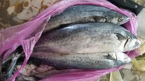cooking Japanese Spanish mackerel ...
