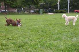 Off Leash Dog Parks In Massachusetts Bringfido