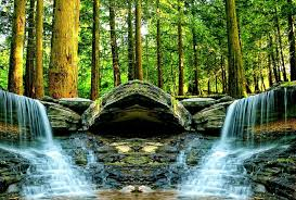 forest tree waterfalls river moving