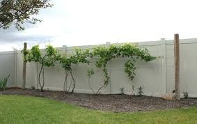 Diy Grape Vine Trellis Google Search Vine Trellis Grape Vine Trellis Grape Trellis