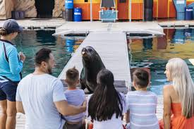 seal encounter surfers paradise gold