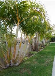 nice small palm trees with images