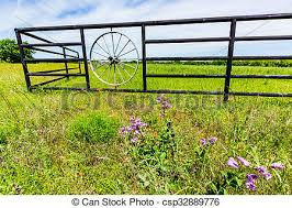 Wagon Wheel Fence And Texas Wildflowers A Fence With Wagon Wheel And Beautiful Field Full Of Bright Orange Indian Paintbrush