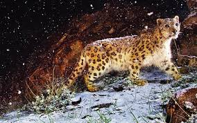 baixar mac os x snow leopard wallpapers