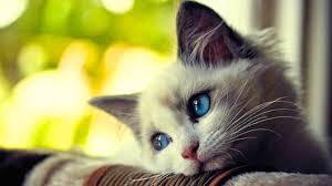 الحيوانات أيضا تبكي فادي نصار Greenarea Me